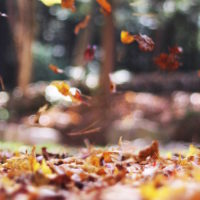 Selling Your House in Autumn